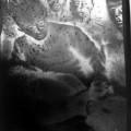 Когда человек спит - Оригинал с инфракрасной пленки -  позитива на негатив +.JPG