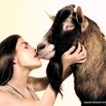 Любовь зла, полюбишь и козла, и козлы этим пользуются .png